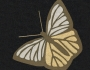 Uzorci veza - Leptir
