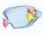 Uzorci veza - Riba slika dizajn